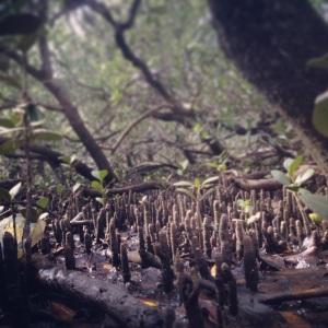 The finger forest